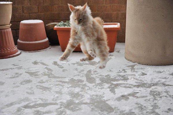 قطة تشاهد الثلج