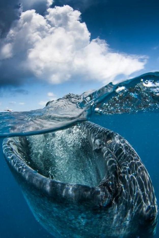 كائنات بحرية