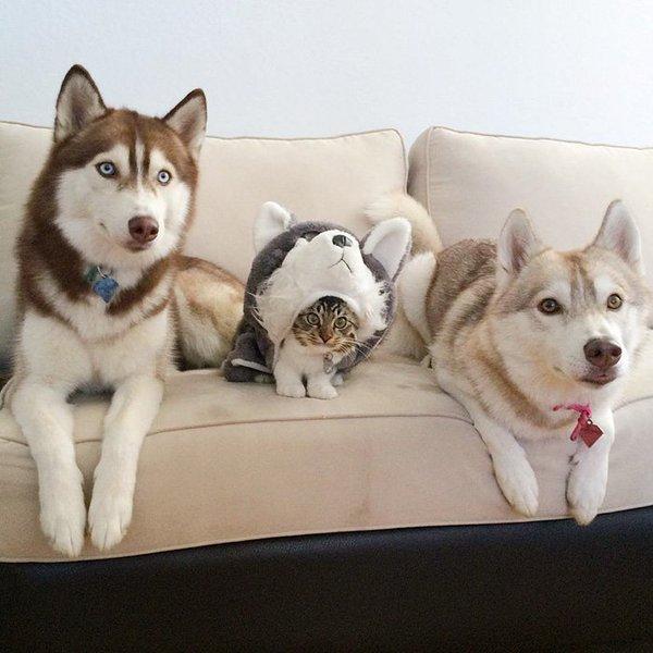 كلاب وقطة