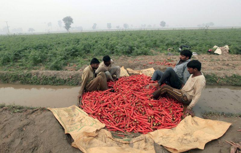 مزارعين