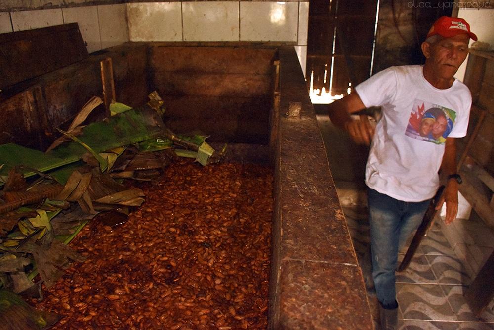 مزرعة كاكاو