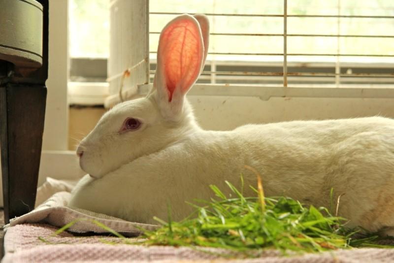 كيف يرى الأرنب