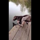 كلب يشرب من بحيرة