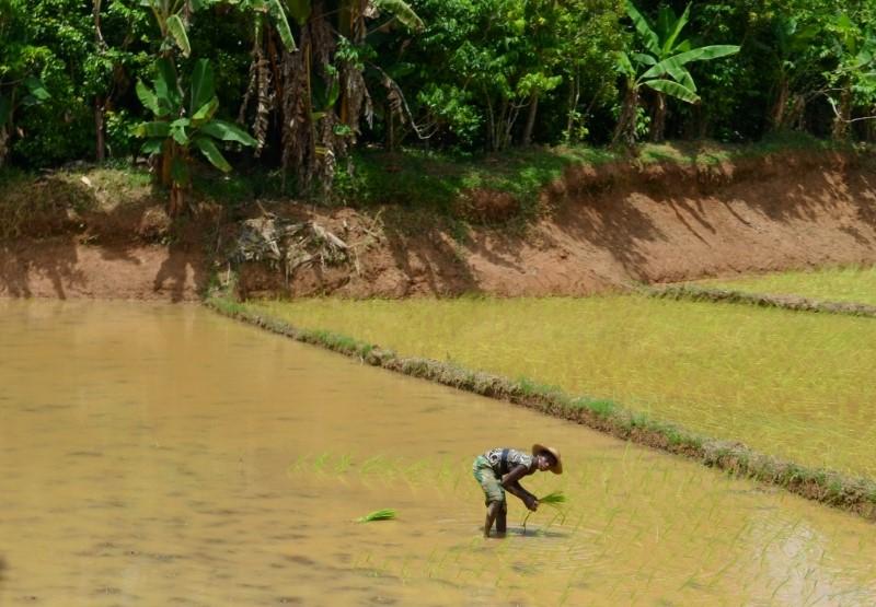 الفانيليا في مدغشقر