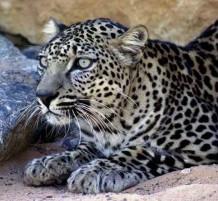 حيوانات على حافة الانقراض