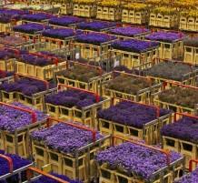 بيع الزهور