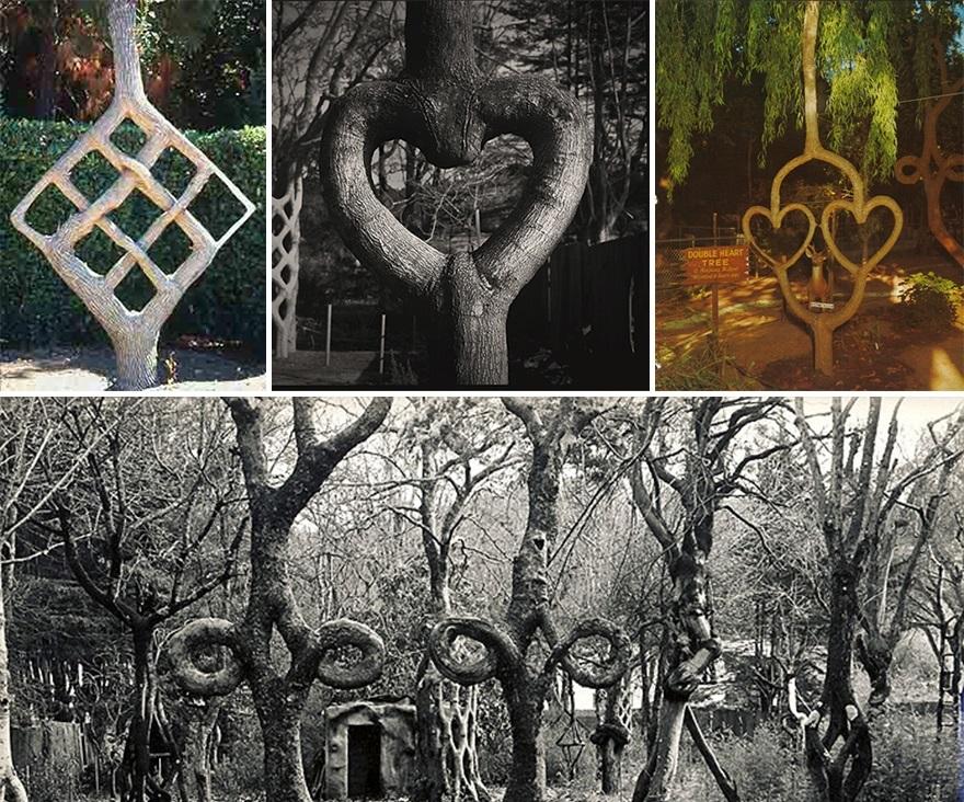 الأشجار