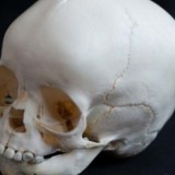 Sell Human Bones Online