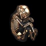 عظام الإنسان