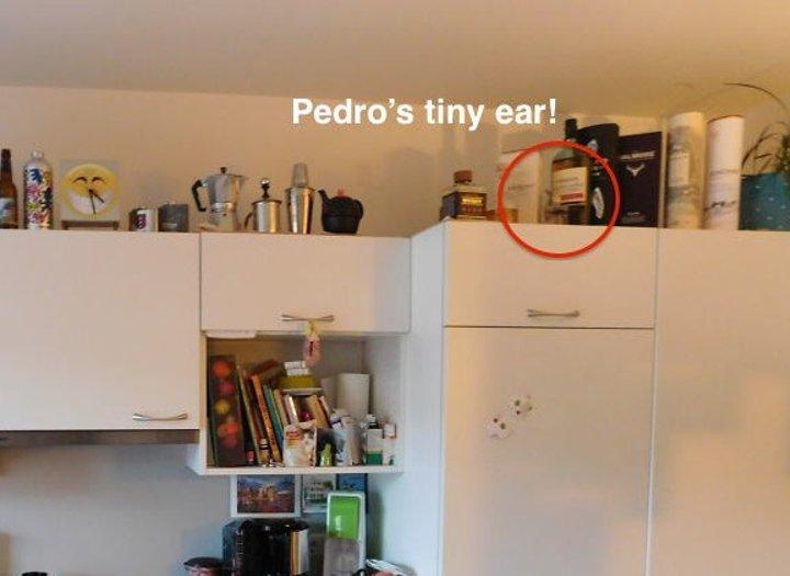 أذن بيدرو
