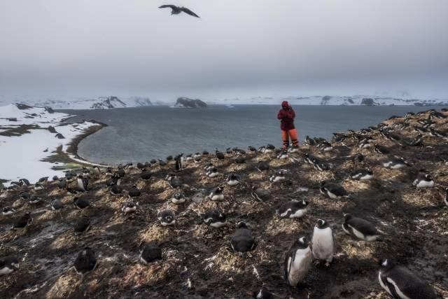 القارة القطبية