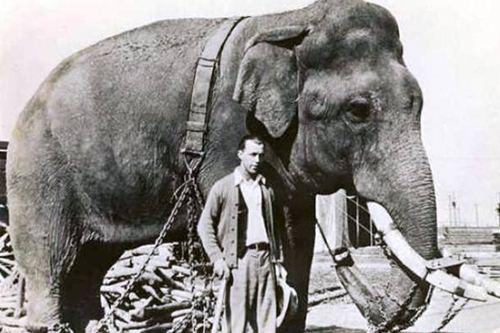 تجربة الفيل والمخدرات