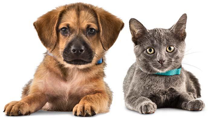 حيوانات أليفة في لاس فيغاس