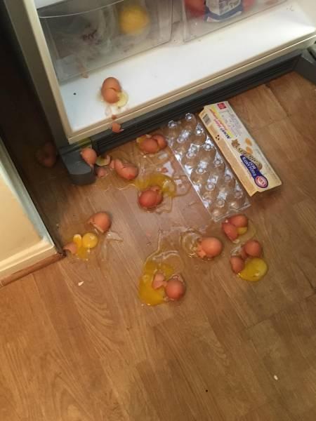 سقوط كرتونة البيض
