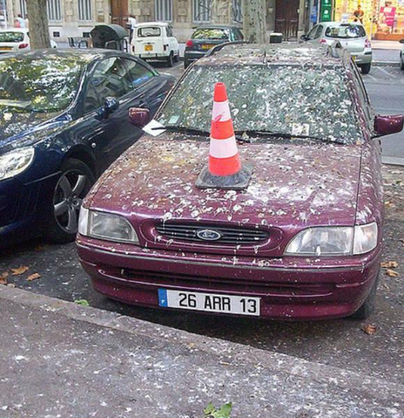 سيارة تغطيها الفضلات
