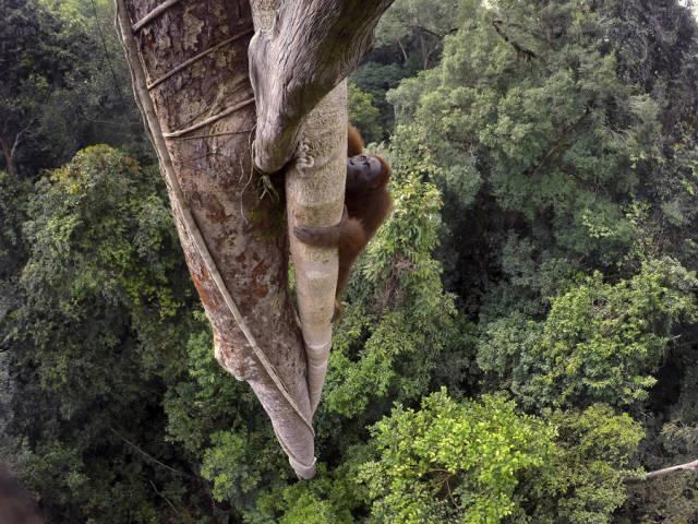 قرد يتسلق شجرة