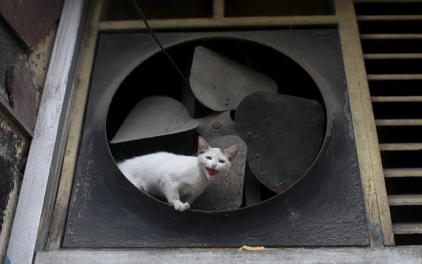 قطة قرب مروحة