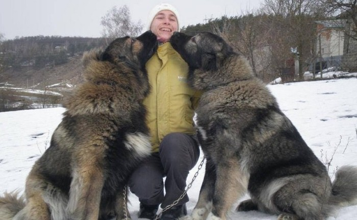 كلاب شيفرد