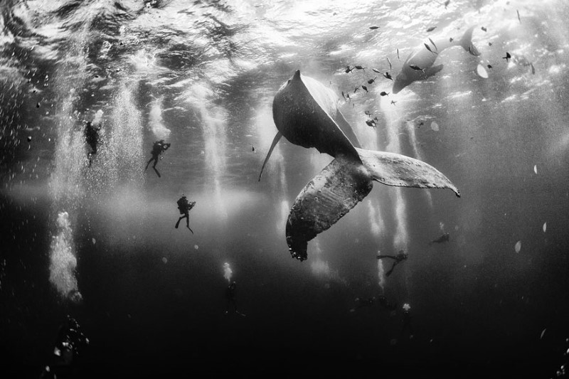 يوم الحيتان العالمي