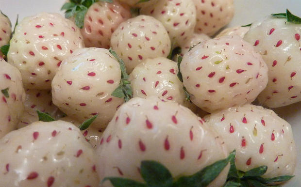 أنواع فراولة مختلفة