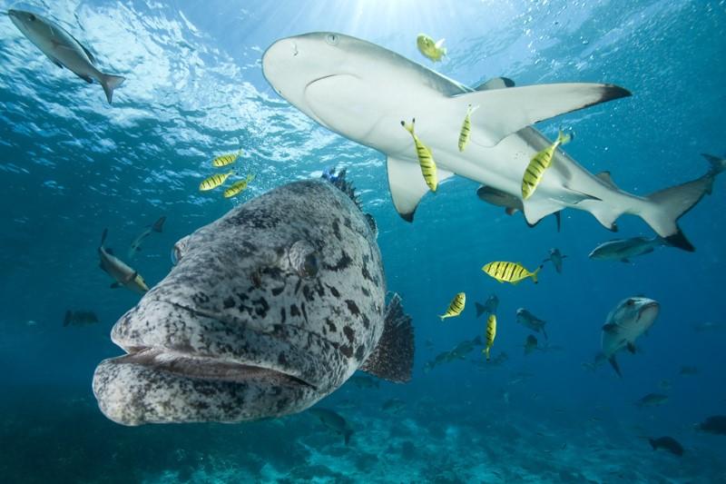 جزيرة ألدابارا المرجانية الجميلة