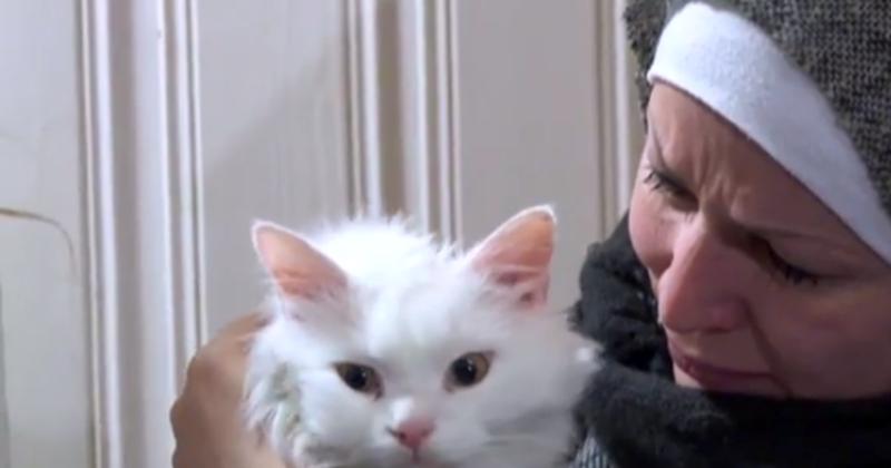 قطة من العراق فُقدت في اليونان