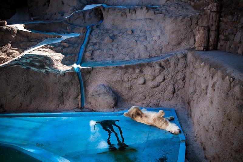 حدائق الحيوانات الظالمة