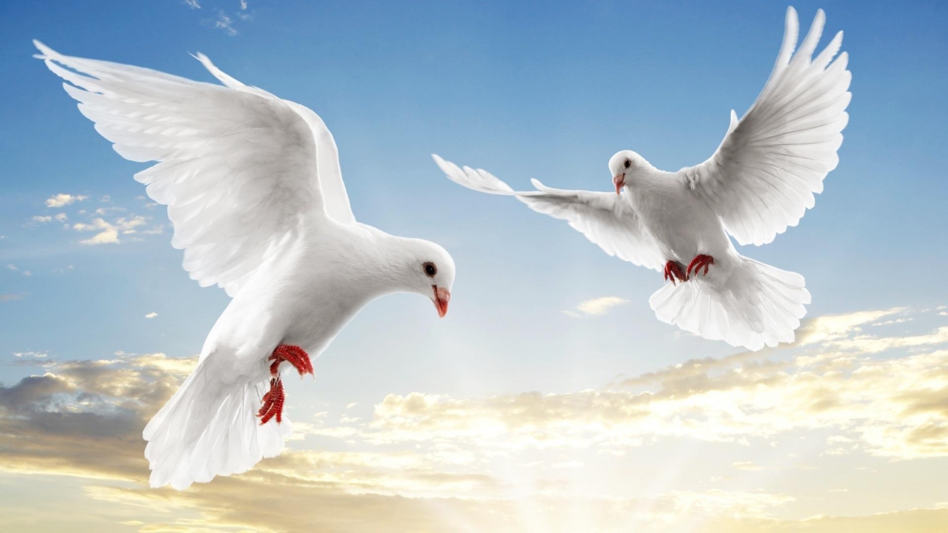 رموز السلام