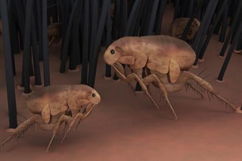 الحشرات في الحروب