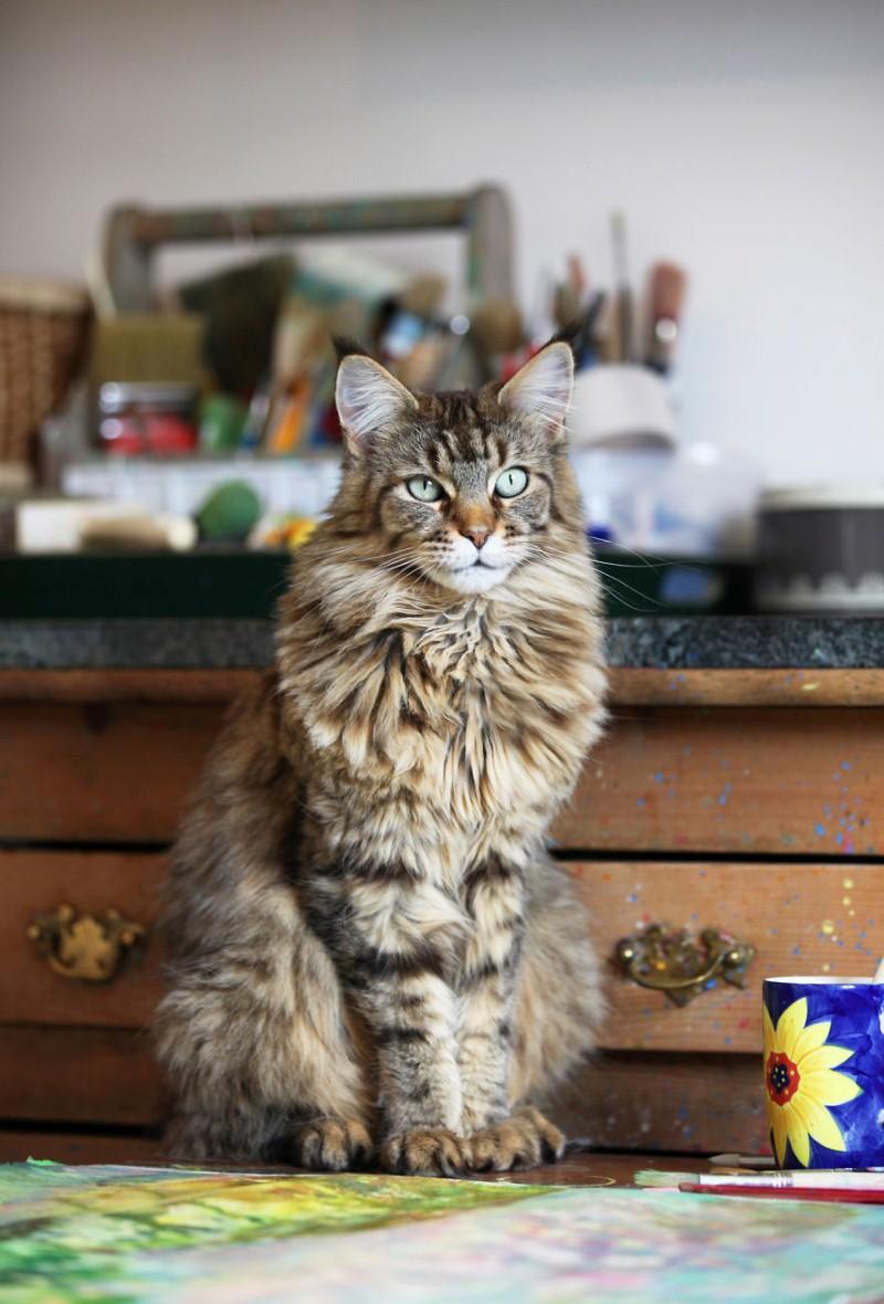 القط ثولا