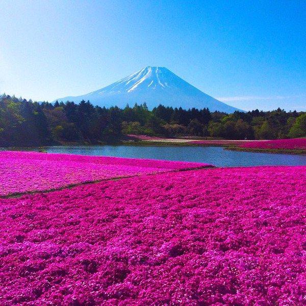 جبل فوجي