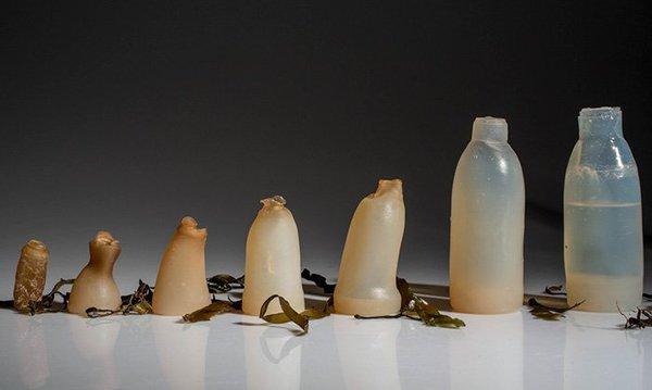 زجاجة من الطحالب