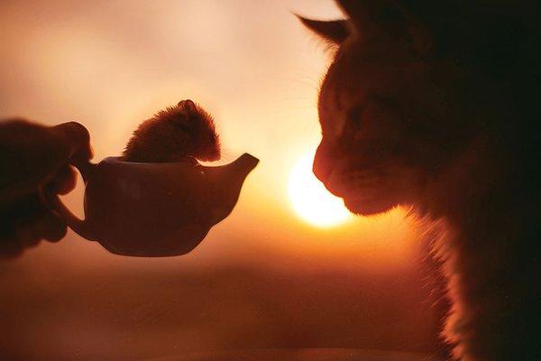 صور قطة