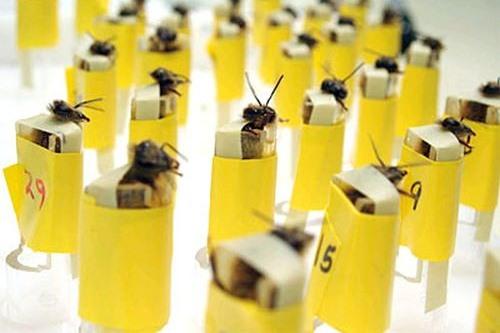 قنابل النحل