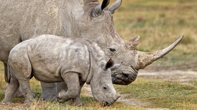حنان الأم عند الحيوانات