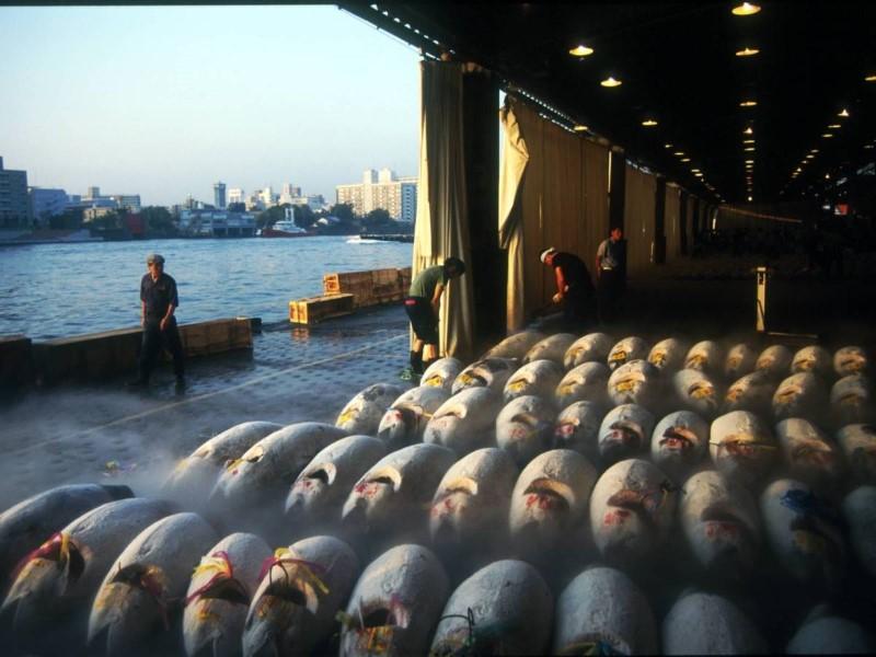 سوق تسوكيجي للسمك