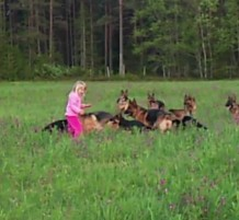 بنت تلعب مع الكلاب