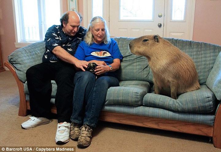 تقرير أضخم الحيوانات الأليفة التي تعيش معنا