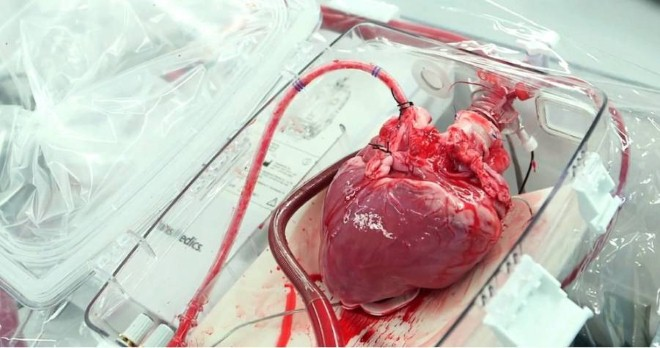 ذاكرة القلب
