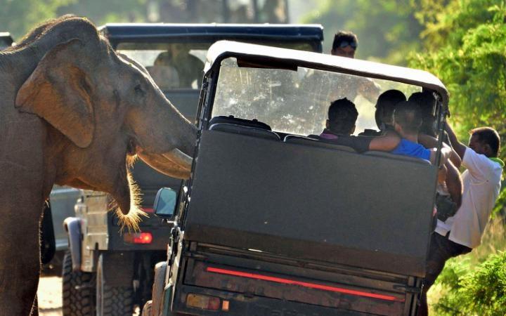 فيل يهاجم السياح