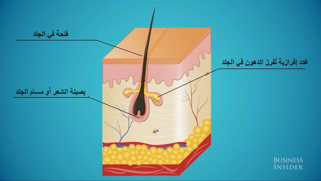 مسام الجلد