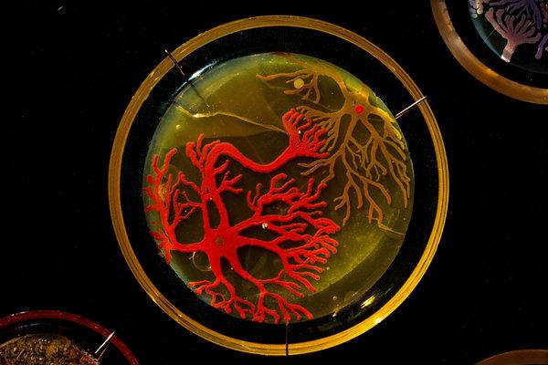 فن البكتيريا والميكروبات