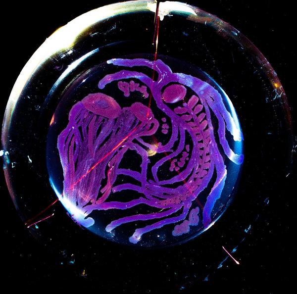 فن البكتيريا والميكروبات 0741617