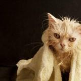 خوف القطط من الماء