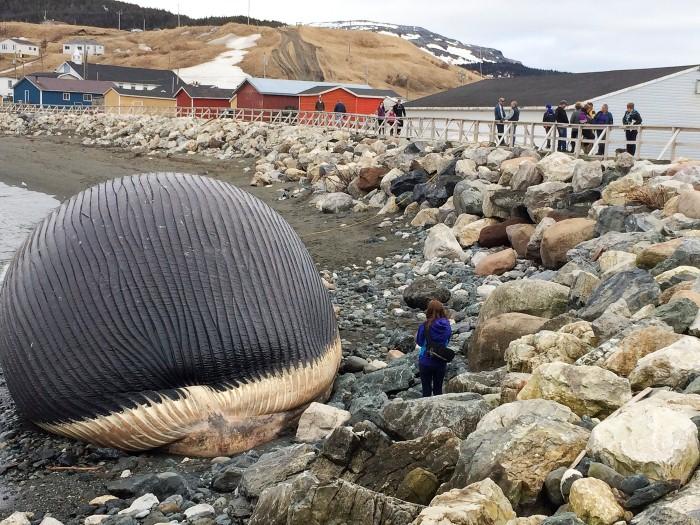 الحيتان الميتة