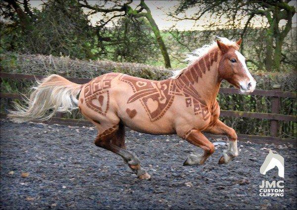 شعر الخيول