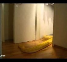 الثعابين صارت تفتح الأبواب