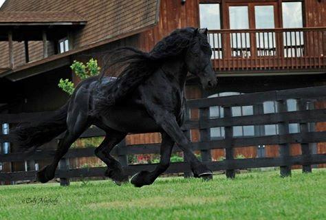 حصانِ