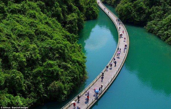 جسر بين الأشجار