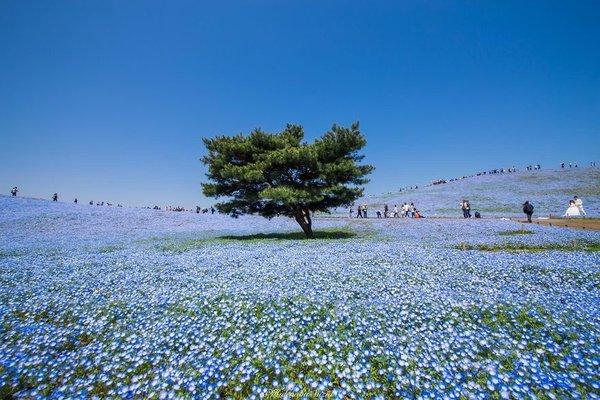 متنزه في اليابان